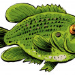 Stock Photo: Rock Bass