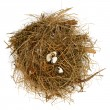 Stock Photo: Broken nest egg