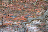 Brick walls with roots — Stock Photo