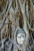 Buddha Head Surrounded by Roots in Ayutthaya — Foto Stock