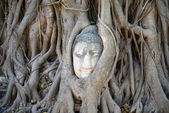 Buddha Head Surrounded by Roots in Ayutthaya — Stock fotografie