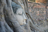 Buddha Head Surrounded by Roots in Ayutthaya — ストック写真