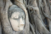 Buddha Head Surrounded by Roots in Ayutthaya — Photo