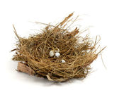 Broken nest egg — Stock Photo