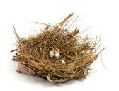 Broken nest egg — Stock Photo