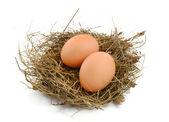 Em um ninho de ovos — Fotografia Stock