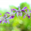 Pink Orchids — Stock Photo