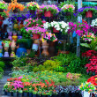 Flower Shop — Stock Photo #40897201