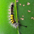 Caterpillar — Foto de stock #41026745