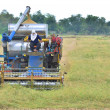 Stock Photo: Combine harvesting