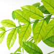 Leaves — Stock Photo #41065487