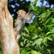 Monkey — Stock Photo #41067923