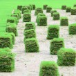 Stock Photo: New lawn