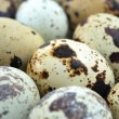 Stock Photo: Quail Egg