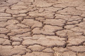 Parched earth — Stock Photo