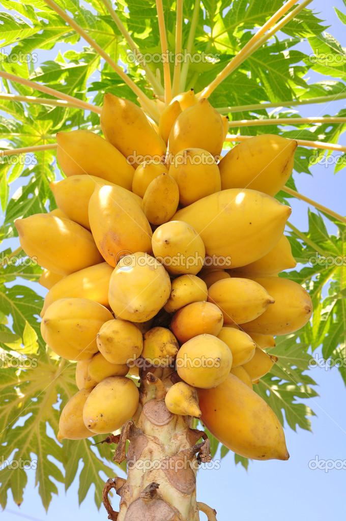 lunamarina  汁木瓜