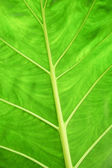 Surface of leaves — Stock Photo