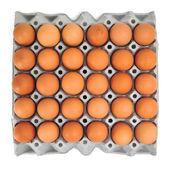 ägg i kartong — Stockfoto