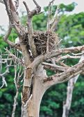 Nest on dried tree — Foto Stock