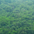 Rainforest — Stock Photo #41887703