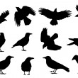 Crow silhouettes — Stock Vector