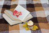 Apple cupcakes — Stock Photo