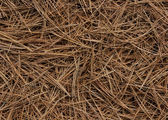 Abstract White Pine Needles #1 — Stock Photo