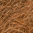 Stock Photo: Abstract White Pine Needles #2