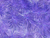 White Pine Needle Pattern Inverted — Stock Photo