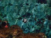 Striped Fish — Stock Photo