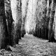 Stock Photo: Forest paths