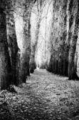 Forest paths — Stock Photo