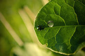 A small insect — Stock Photo