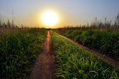 Road to the sun — Stock Photo