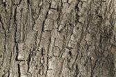Tree cortex — Stock Photo
