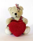Teddy Bear toy — Stock Photo