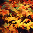 Autumn leaves — Stock Photo #13250131