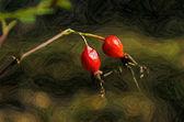 Briar Berries — Stock Photo