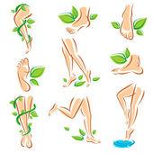 Healthy legs set. — Stock Vector