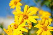 Yellow flowers on a bed — Stock Photo
