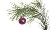 New Year's spheres on a fir-tree branch — Foto Stock