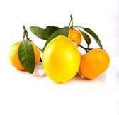 Tangerine with leaves — Stock Photo