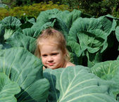 The girl in cabbage — Stock Photo