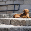 Dog and stairs — Stock Photo