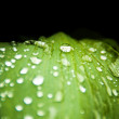 Green leaf with rain droplets - Stock Photo