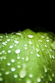 Green leaf with rain droplets — Stockfoto