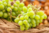 Grapes in the basket.Grapevine over vineyard background — Stock Photo