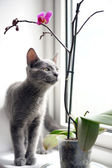 Cat and orchid — Stock Photo
