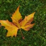 Oriental dry banana leaf — Stock Photo #13120978