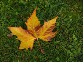 Oryantal kuru muz yaprağı — Stok fotoğraf